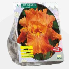 Iris Germanica, Orange per 3. SOLD OUT!