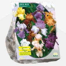 Iris Germanica, Mix. SOLD OUT!