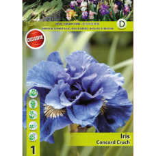 Iris Siberica Concord Crunch (x1). SOLD OUT!