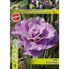Iris Siberica Pink Parfait (x1). SOLD OUT!