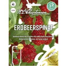Strawberry Spinach (Chenopodium foliosum) NEW!