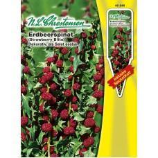 Strawberry spinach Erdbeerspinat. SALE - 40%!
