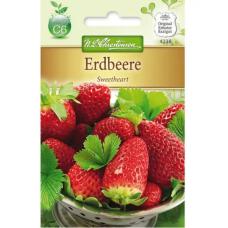 Strawberry Sweetheart (Fragaria x ananassa)