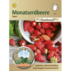 Strawberry Rugen,Fragaria vesca, tape seeds