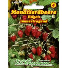Strawberry Rügen (Fragaria vesca)