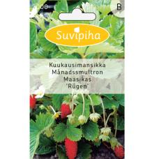 Wild strawberry 'Rügen' (Fragaria vesca)