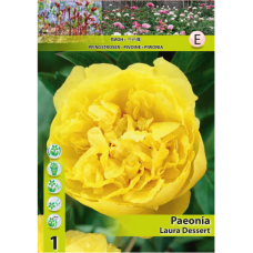 Paeonia Laura Dessert (x1). SOLD OUT!
