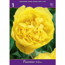 Paeonia Yellow (x1). SOLD OUT!