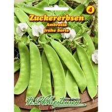 Sweet pea ambrosia (Pisum sativum)