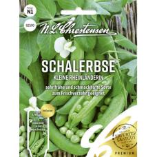 Pea 'Kleine Rheinländerin',NEW! PREMIUM