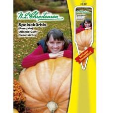 Pumpkin 'Atlantic Giant' (Cucurbita maxima), 10 gr