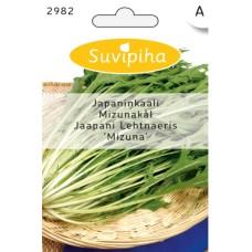 Japanese cabbage Mizuna