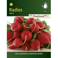 Radish Saxa 2, seed tape