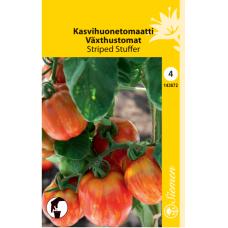 Greenhouse tomato 'Striped Stuffer'. SALE - 25%!
